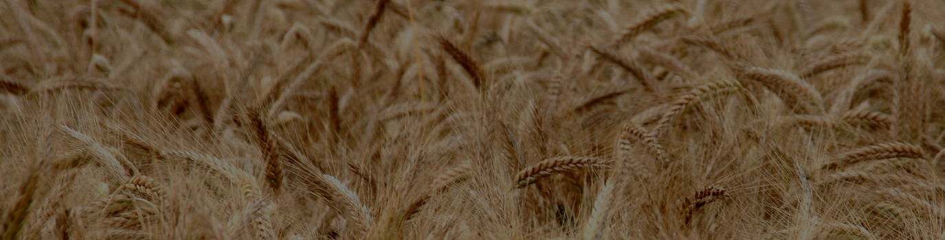wheat_slide
